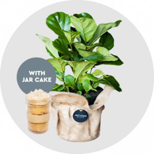 TFC8490 Just 'Cause Bunch – Fiddle Leaf Friday Product